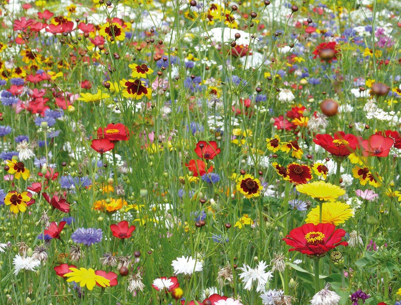 Je veux savoir 2015 septembre for Photos fleurs de jardin